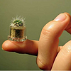 Boo-Boo Plant Fluffy miniature pet plant 微型盆栽
