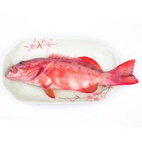渔传播 印尼进口冰鲜东星斑 500-650g 1条 海鲜水产