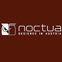 猫头鹰 noctua