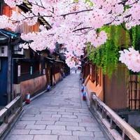出游必备:重庆送签 日本个人旅游签证
