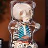 4D MASTER X JASON FREENY 软糖小熊透视解剖骨骼模型 338元包邮