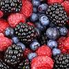 108种水果的战场