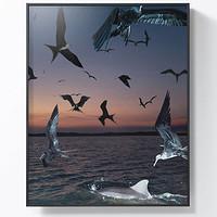 PICA Photo 拾相记 Benoit Paillé 作品《海鸟与海豚》33×30cm 收藏级影像工艺 无酸装裱 限量50版