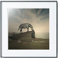 PICA Photo 拾相记 Tomasz Zaczeniuk 作品《斑马》33 x 33 cm 无酸装裱 限量50版